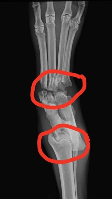 Rusty - Röntgenbild