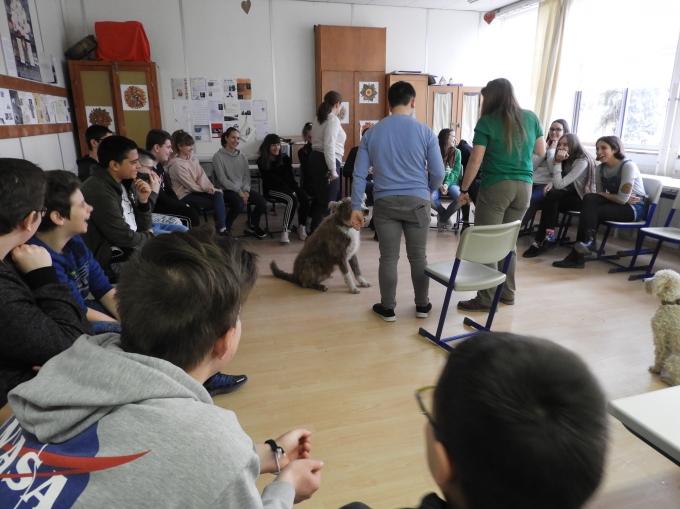 Schulprojekt - Vizsla in Not