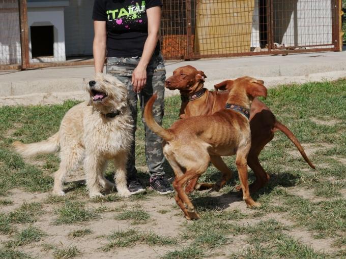 Füle - Hunde